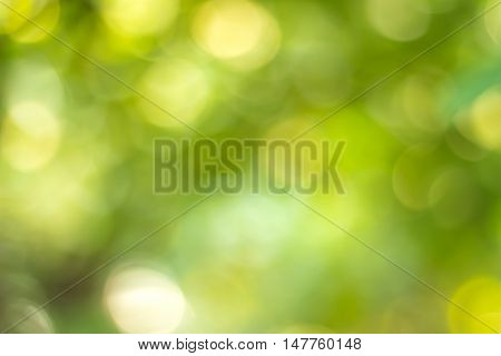 green blurred of nature background. Blurred park, natural background. abstract nature background not in sharpness, a series of images