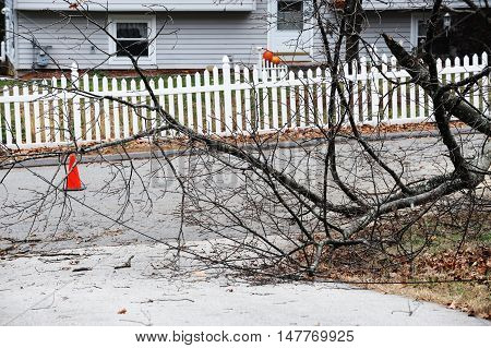 fallen tree block the street after storm