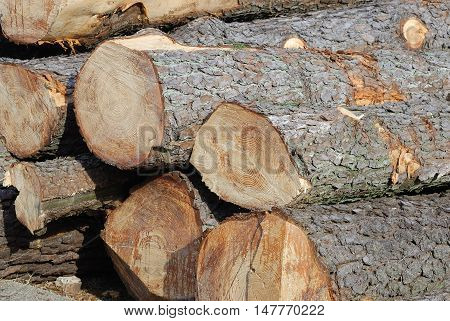 close up on stacking wood for design