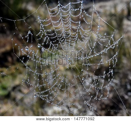 Web cobweb spiderweb net tissue spider's web. Web in the autumn forest. Water droplets on the spider's web.