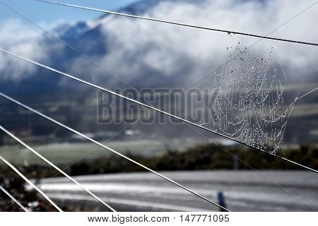 View of spider net with water drops. Water droplets on the spider's web.