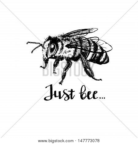Bee with letters. Phrase just bee. Brown and orange graphic doodle design for mug. Black and white sketch. Vector illustration.