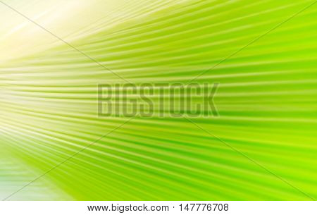 Soft focus on green palm leaf abstract
