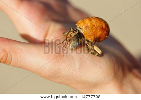 Hermit Crab in a tourist's hand poster