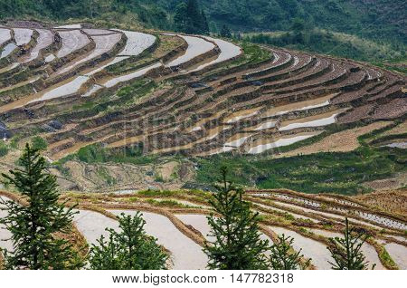 The Longji rice terraced fields scenery in spring