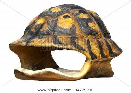 Isolated shell of tortoise