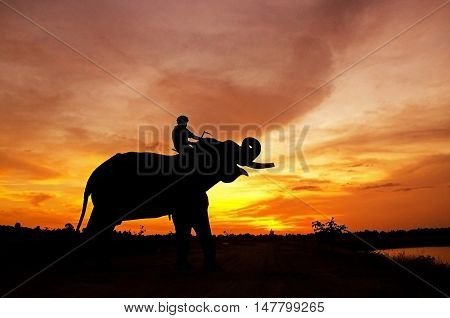 ilhouette Elephant Sunset. Mahout riding an elephant on the sunset. Elephant village in the north east of Thailand, beautiful relation between man and elephant. Life Shadow