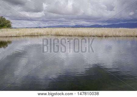 Tablas de Daimiel National Park. It is a nature reserve in south-central Spain.