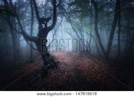 Mystical Autumn Foggy Forest In The Morning. Old Trees