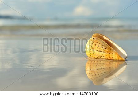 Shell on a beach with reflection