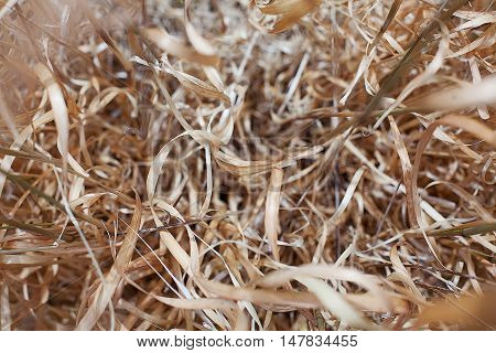 Background Of Dried Grass