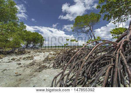 Mangroves In Andaman Beach, India
