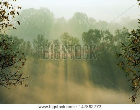 Autumn trees smothered in morning fog. Sunbeams penetrate mist.