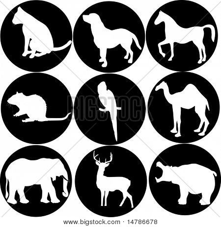 illustration with different animal icons