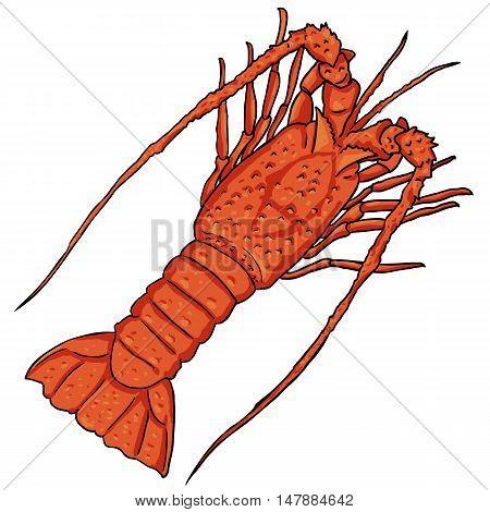Vector Cartoon Lobster