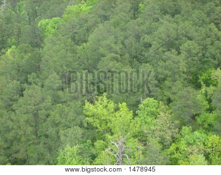 Broccoli Trees