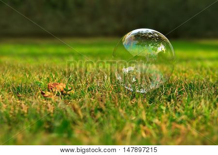 The rainbow bubbles from the bubble blower. Soap bubbles on green natural background.