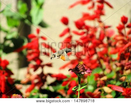 Photo insect - roisterer, over a flower. Picture taken in September 2008.