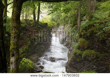 Fast mountain river flowing among mossy stones and boulders in gorge in green forest.