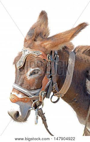 the Donkey isolated on the white background