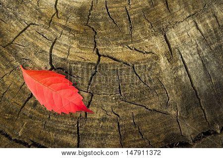 Single red autumn leaf on a stump. the onset of autumn. Hello autumn.