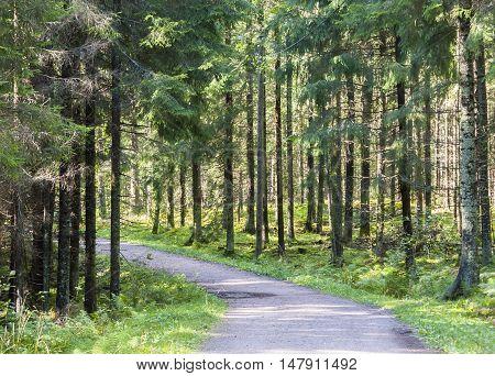 Pedestrian footpath or walkway in green summer forest