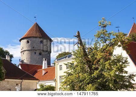 Kiek in de Kok cannon tower in the old town of Tallinn Estonia