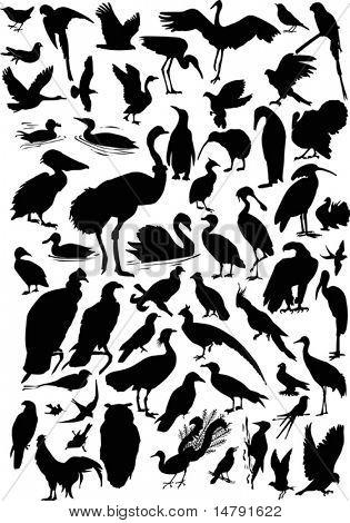 Abbildung mit verschiedenen Vogel-Silhouetten-Sammlung, die isoliert auf weißem Hintergrund