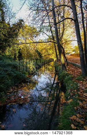 Autumn landscape with colorful leaves river and reflections in water in Caravaca de la Crus Spain