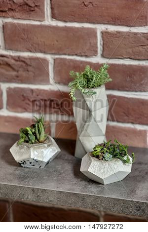 Beautiful close-up photo of three decorative pots with green plants on the textured rack on the brick wall background. Vertical.