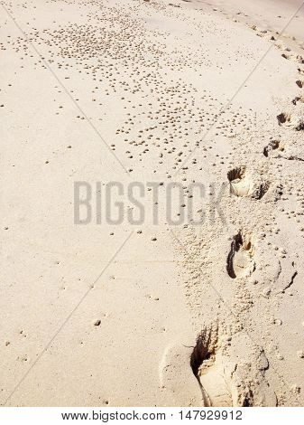 Feet track on the beach alongside sand dwellers holes
