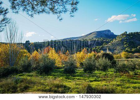 Autumn Landscape   In Caravaca De La Crus, Spain