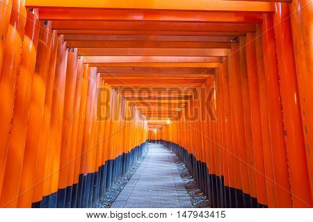 Thousands of vermilion torii gates at Kyoto Fushimi Inari Shrine