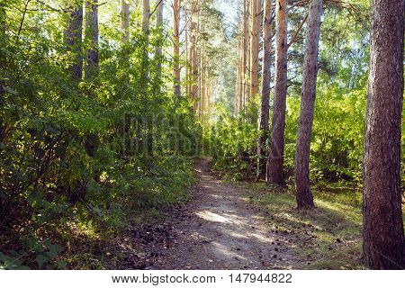 green alley with rural footpath outdoor nature
