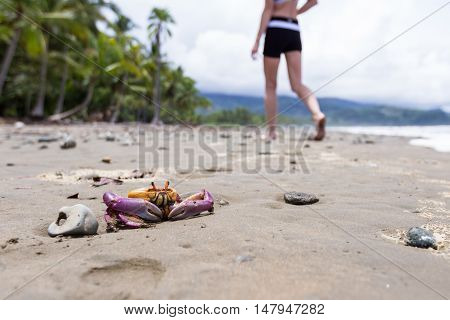 Tropical Crab On The Beach