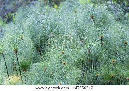 Soft Plant Texture