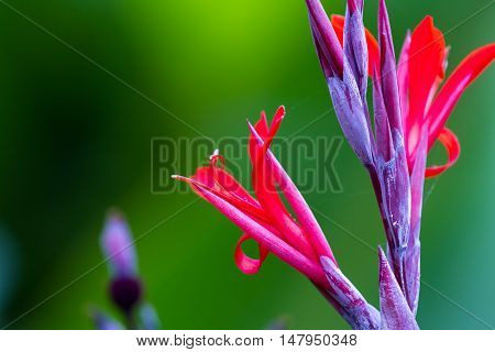 Colorful Rain Forest Flower