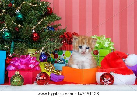 Orange and white ginger kitten sitting in a present box next to a christmas tree with presents and ornaments on a red and white fur carpet red striped background with copy space