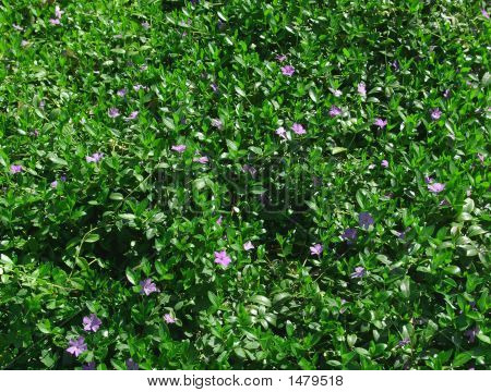 Spring Ground Cover