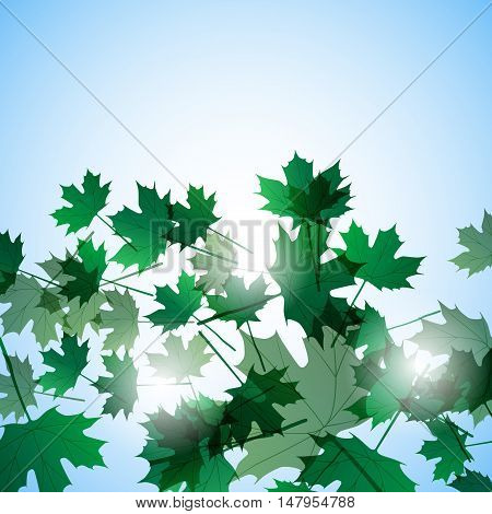 Illustration autumn still life. Maple leaves. Vector background