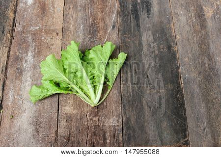 Chinese cabbage organic vegetables on a wooden table. Insect eat hole in the leaf. Close up and copy space background.