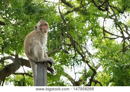 Small mokey sitting on a metal pole with blurry green tree background