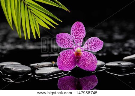 spa concept â??pink orchid with stones and green plant