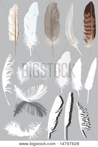 illustration with fifteen feathers isolated on grey background