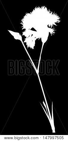 illustration with flower silhouette isolated on black background