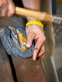 Blacksmith shoeing a gray horse. Hammering the horse shoe nail into the shoe poster