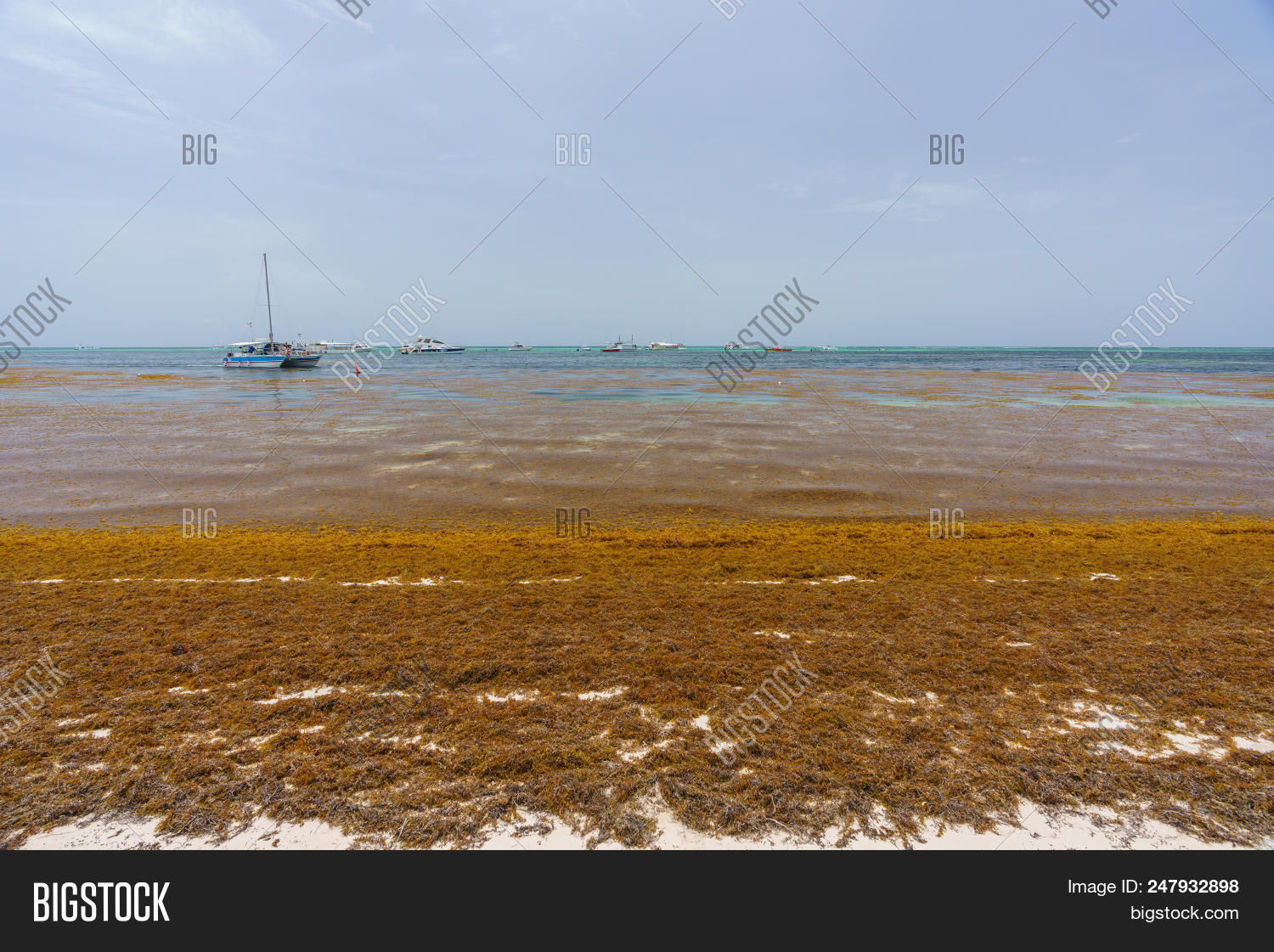 Punta Cana, Dominican Image & Photo (Free Trial) | Bigstock
