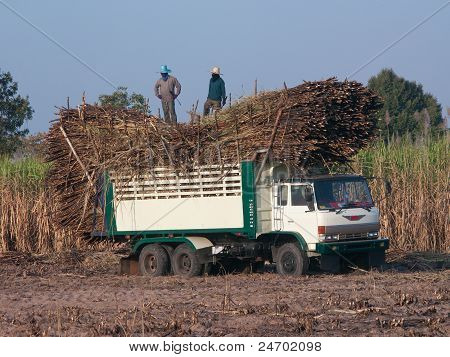 Truck Loaded With Sugarcane