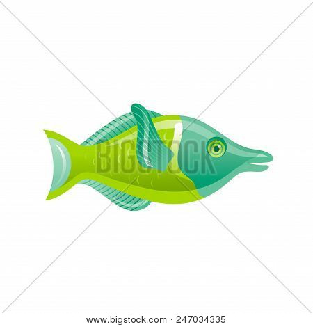 Vector Illustration Eps10, Isolated On White Background. Realistic Sea Animal Symbol, 3d Wrasse Fish