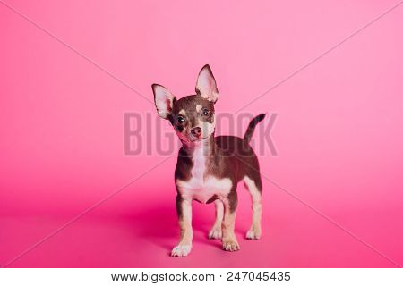 Cute Light Brown Image & Photo (Free Trial) | Bigstock